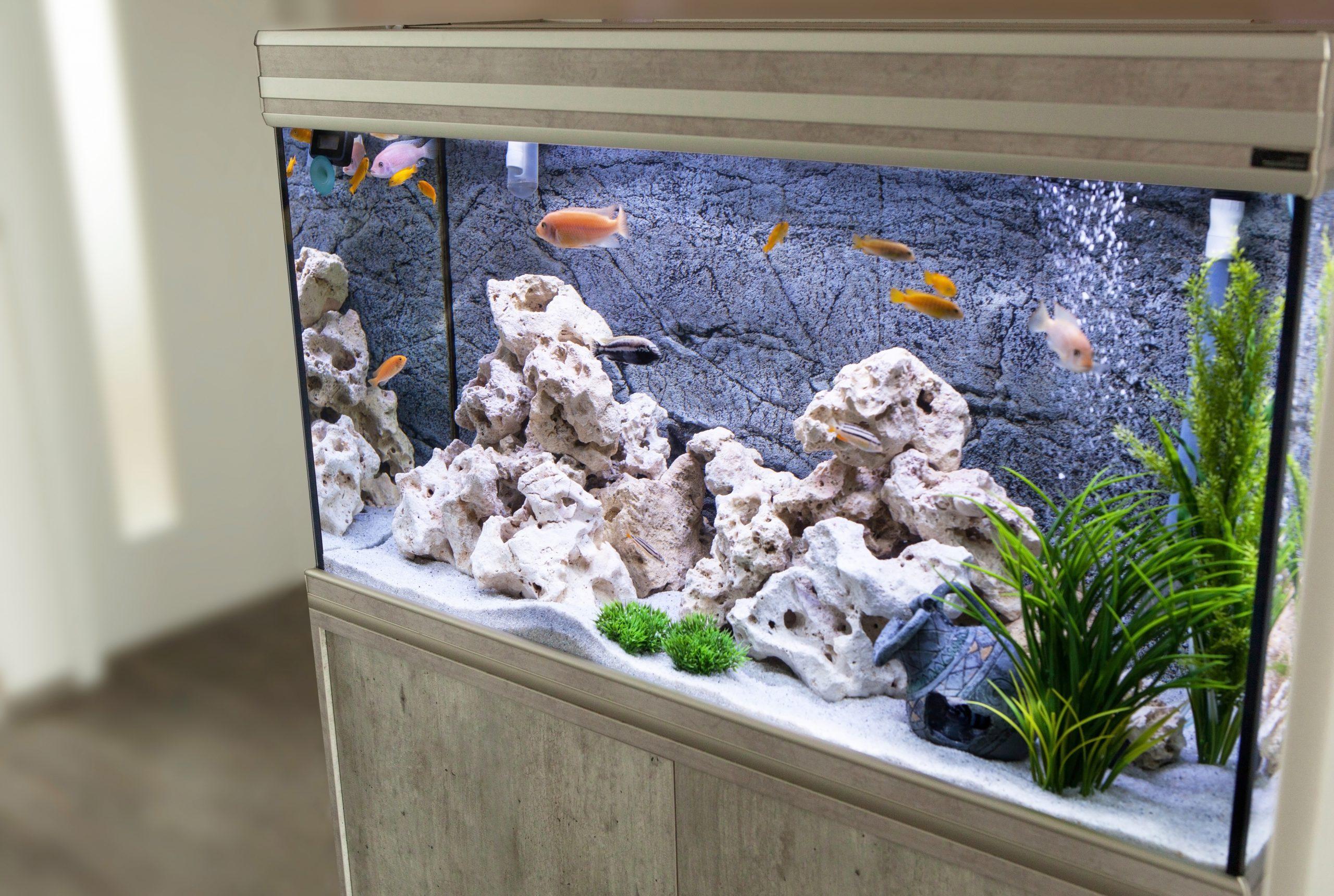 Urządzanie akwarium 60l